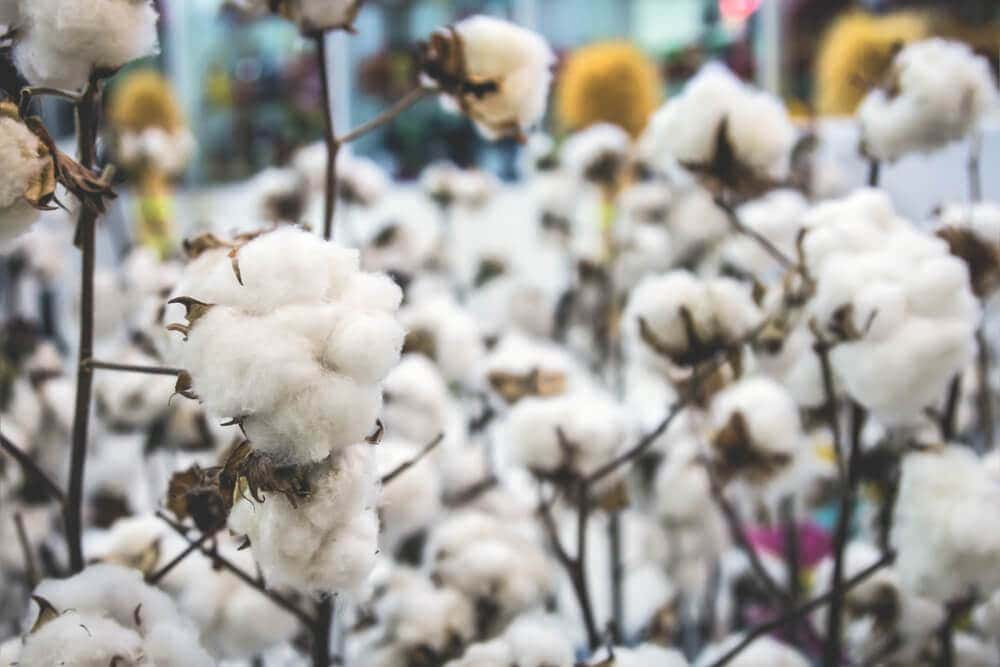 Cotton is the favoured textile and material for outdoor apparel