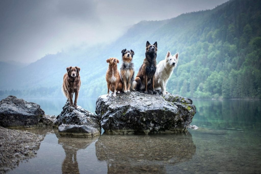 Group of active off leash hiking dogs
