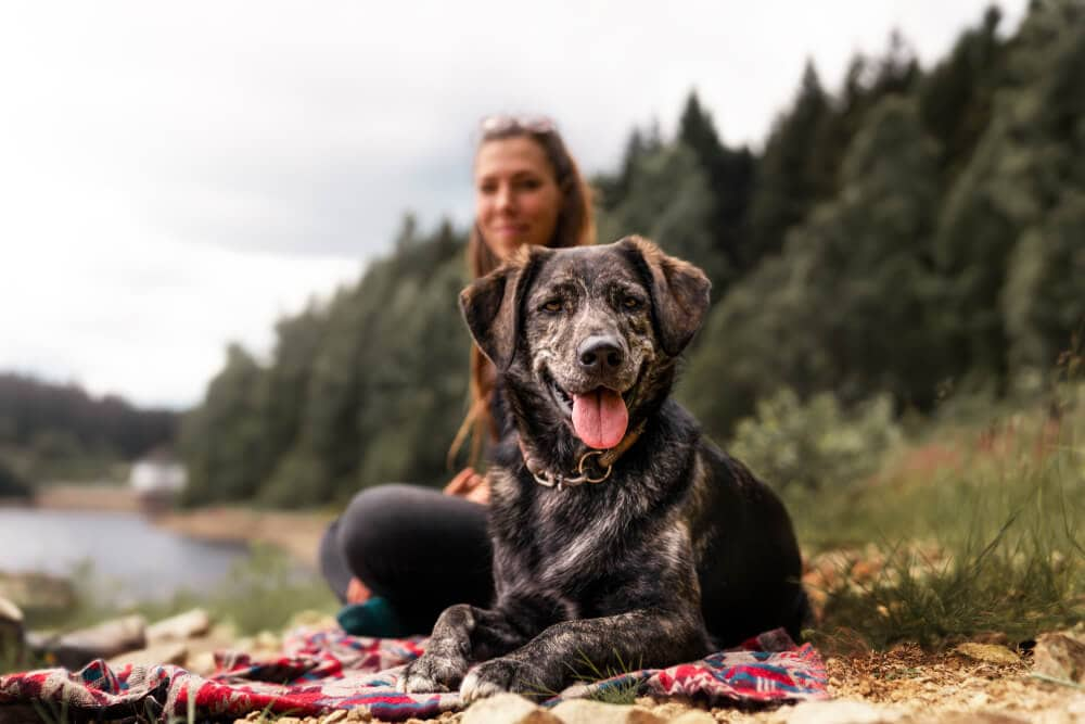Hiking dog partner outdoors with hiker