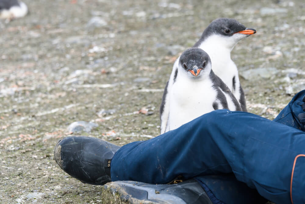 Penguins spot nice boot