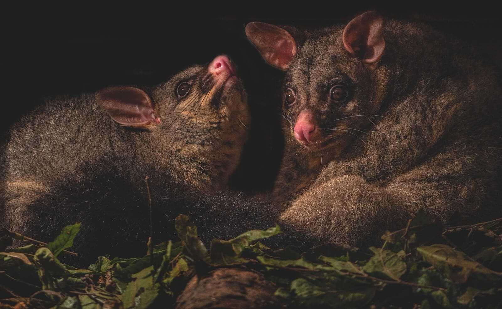 How To Get Rid Of Possums? Here Are 7 Proven Ways Right Now