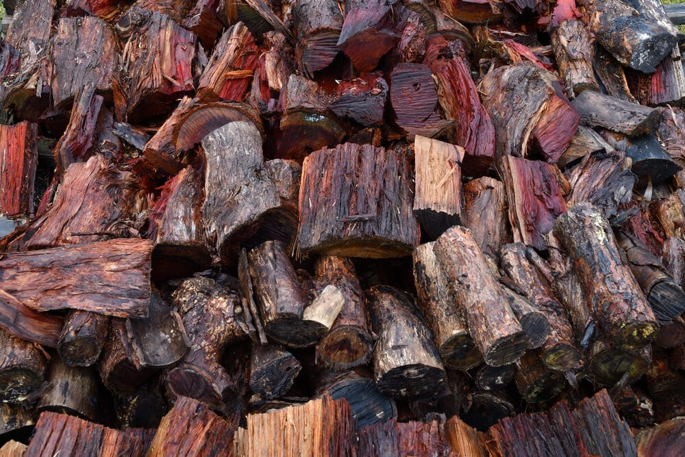 Wet and damp firewood not good for fire