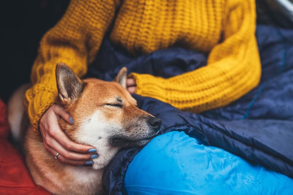Woman camping solo in yellow knit jumper and blue sleeping bag with brown dog on lap